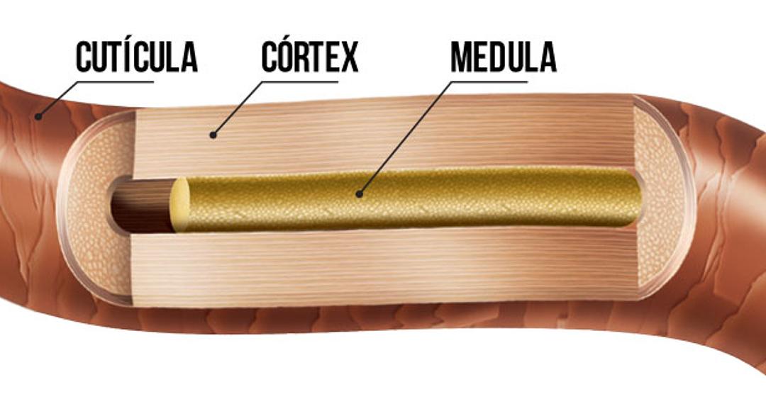 Tudo sobre as cutículas do cabelo - Bellkey Professional